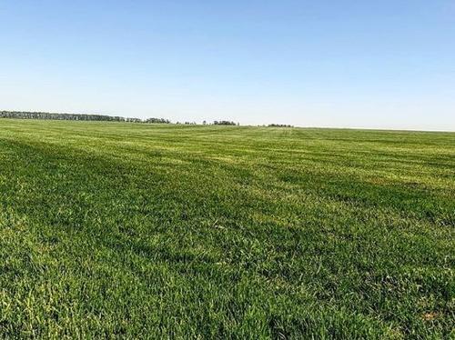 Купить газонный грунт в Москве